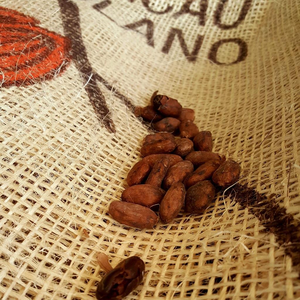 Terre del cacao: un mondo dolce e raffinato