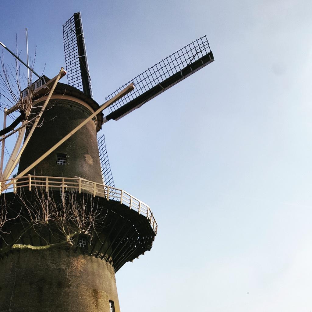 Gin o jenever? A Schiedam, tra i mulini più alti d'Olanda, si produce qualcosa di buono