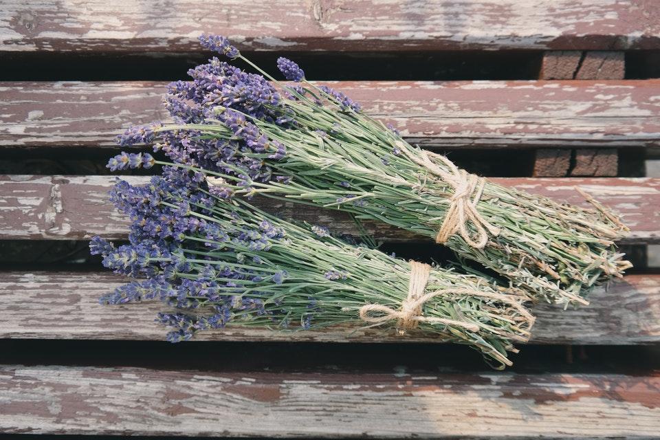 Profumi di Sardegna: la primavera che vorrei